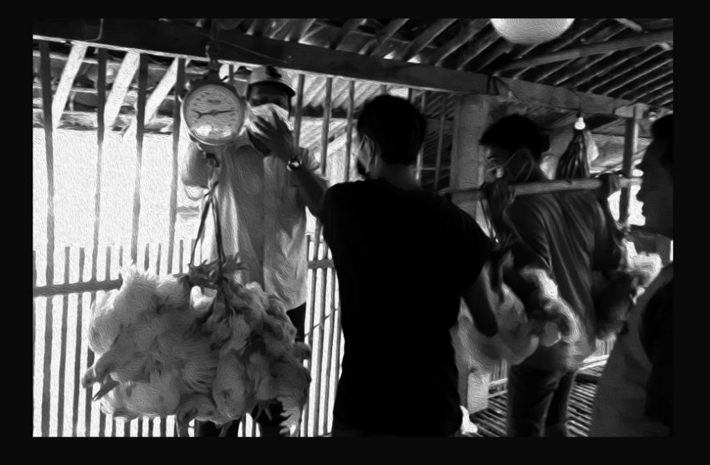 Laporan Kondisi Peternak Ayam Akibat Wabah Virus Corona
